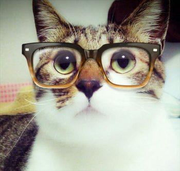 Szemüveges macska