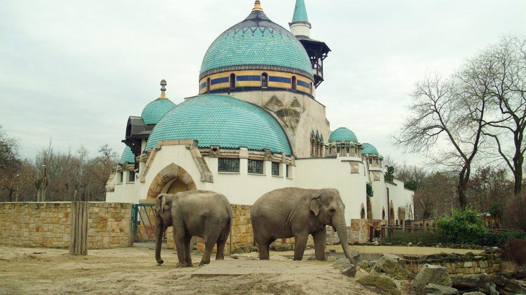 2 elefént az állatkertben