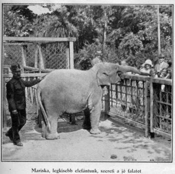 Fekete-fehér fotó egy régi állatkertről