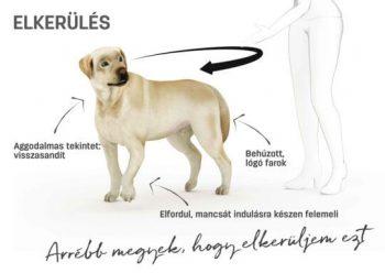 Rajzolt kép és magyarázat a kutya testbeszédéhez