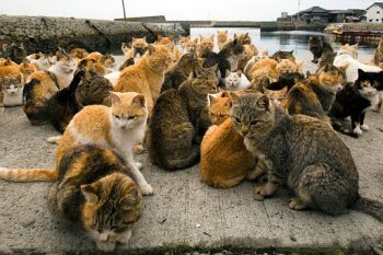 """Macskák a japán """"macska-szigeten"""""""